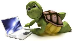 Sköldpadda med laptop